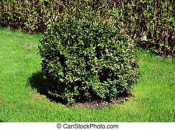 Un arbusto verde en el fondo de la hierba