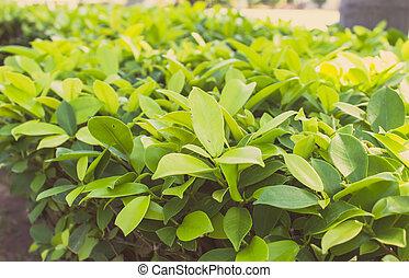 Un arbusto verde