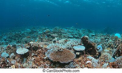 Un arrecife de coral muere
