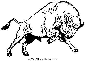 Un bisonte europeo blanco negro