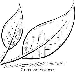Un boceto de hojas