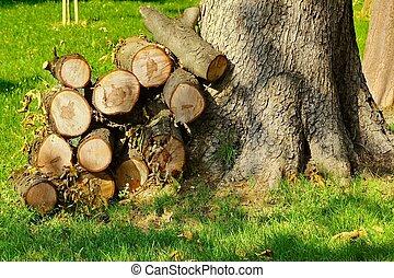 Un bosque cerca de un gran árbol en el jardín del parque