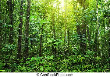 Un bosque denso.