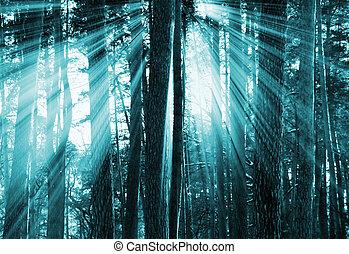 Un bosque oscuro y oscuro
