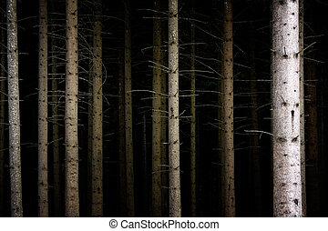 Un bosque oscuro y profundo
