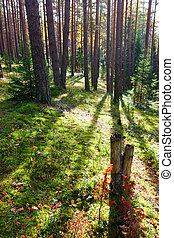 Un bosque soleado