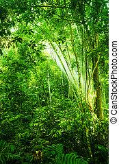 Un bosque tropical denso natural