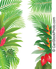 Un bosque tropical