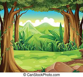 Un bosque verde cruzando las montañas altas