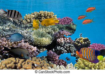 Un brote de arrecife de coral con peces