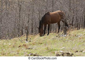 Un caballo de pastoreo