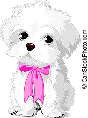 Un cachorro blanco