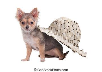 Un cachorro de chihuahua, sentado bajo un sombrero de palma