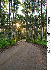 Un camino de tierra en un bosque
