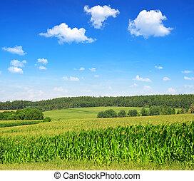 Un campo verde de maíz