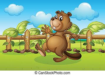 Un castor corriendo dentro de una cerca