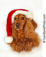 Un cocker spaniel marrón con un sombrero rojo de Navidad