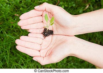 Un concepto ecológico