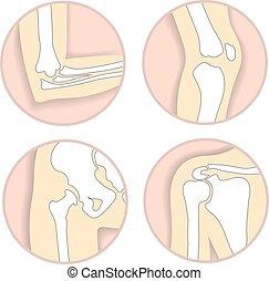 Un conjunto de articulaciones humanas, codo, articulaciones de rodilla, cadera y hombro, estructura ósea esqueletal. Anatomía y signo ortopédico para el centro de diagnóstico médico, ilustración vectorial.