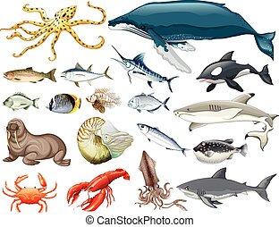 Un conjunto de diferentes tipos de animales marinos