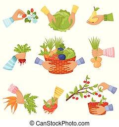 Un conjunto de diferentes vegetales y frutas en las manos. Ilustración de vectores en un fondo blanco.