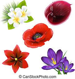 Un conjunto de flores realistas