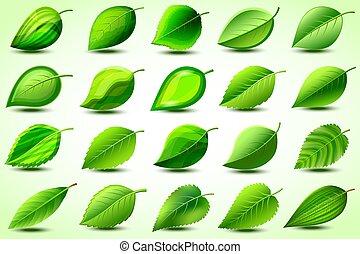 Un conjunto de hojas estilizadas verdes sobre el blanco