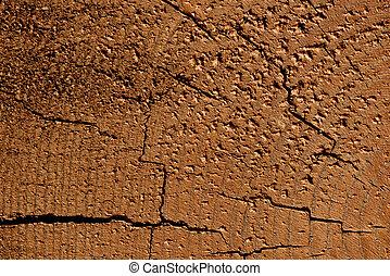 Un corte de árbol, un hermoso fondo de una textura de árbol