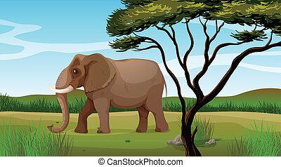 Un enorme elefante