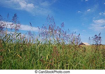 Un establo en el campo