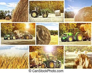 Un fondo agrícola