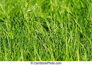 Un fondo de hierba
