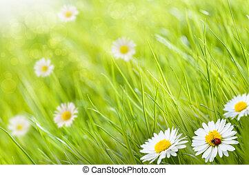Un fondo de hierbas con flores de margaritas y una mariquita, este es un día soleado - la imagen está borrosa en el lado izquierdo para copiar el espacio