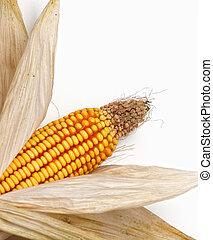 Un fondo de maíz