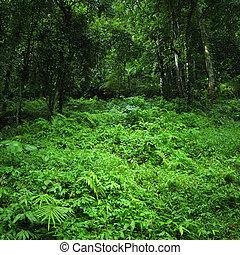 Un fondo de naturaleza verde. Un bosque tropical salvaje