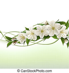 Un fondo de primavera con flores de cereza blanca
