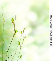 Un fondo de primavera verde con brotes