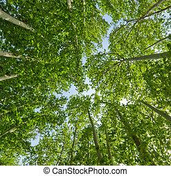 Un fondo de verano de árboles verdes