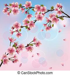 Un fondo ligero con sakura