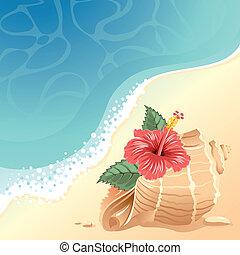 Un fondo marino con cáscara