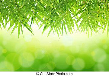 Un fondo natural verde