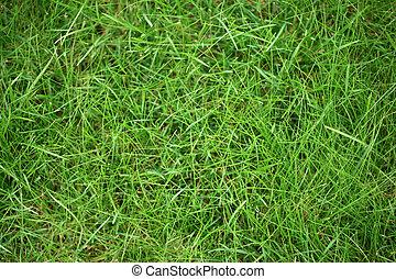 Un fondo verde de textura