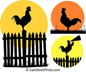 Un gallo de pelea