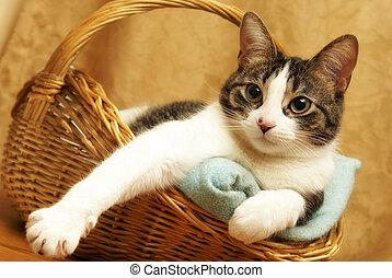 Un gato cómodo en una canasta