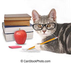 Un gato inteligente escribiendo con libros sobre blanco