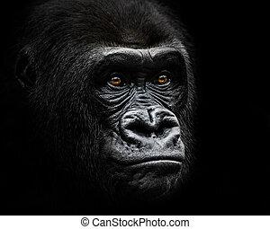 Un gorila de las tierras bajas occidentales