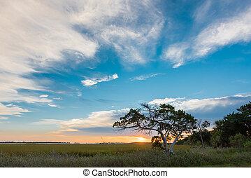 Un gran cielo y un pequeño árbol en la isla Tybee