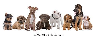 Un gran grupo de cachorros
