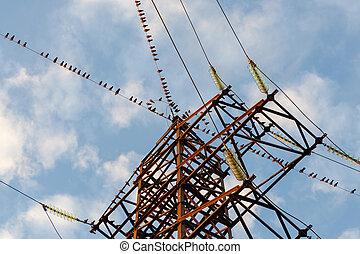 Un gran grupo de pájaros