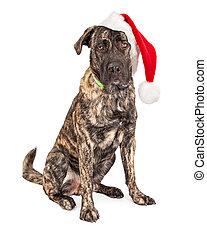 Un gran perro de Santa Claus